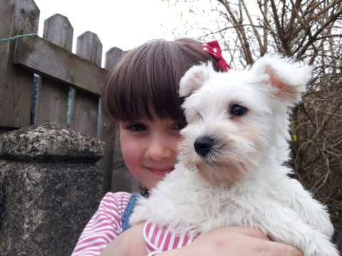 Family appeal for the safe return of five dogs stolen from kennels