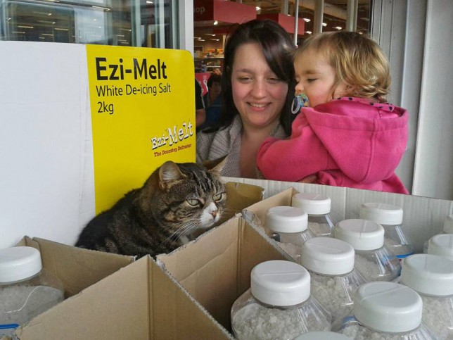 Meet Mango, the cat who has lived in a Tesco store for four years