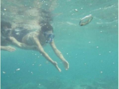 Turtling around! Bikini-clad Cheryl Fernandez-Versini shows off her diving skills during romantic holiday