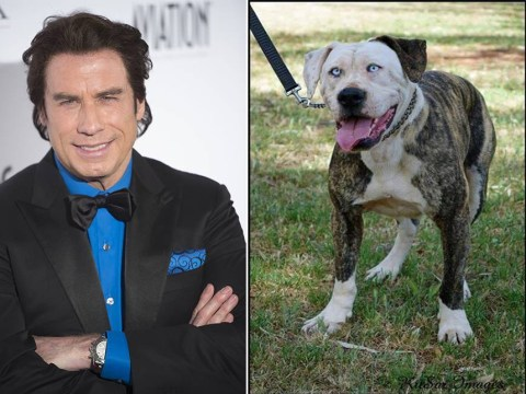 This dog looks like John Travolta
