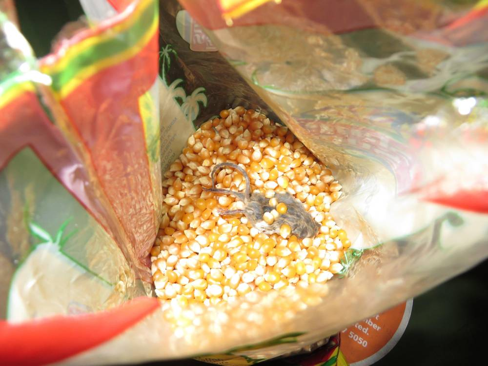 Grandmother finds dead mouse in popcorn packet bought in Tesco store