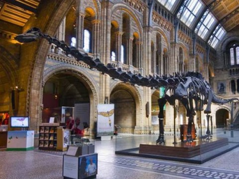 Do NOT ditch Dippy: Why a blue whale will never replace the nation's favourite dinosaur