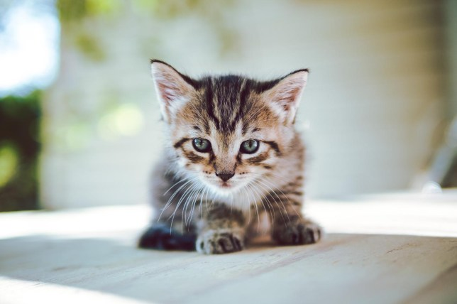 You can get a cute fluffy kitten delivered to your desk to cuddle on your lunch break