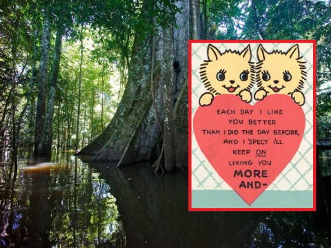 High-street Valentine's Day cards are being made with illegally-logged trees