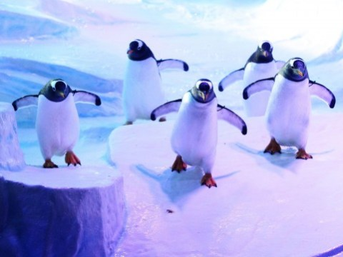 S-s-slip up a penguin: Fake ice is 'too slippy' for the penguins at Hull aquarium