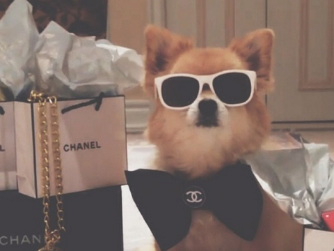 The Rich Dogs of Instagram are leading more fabulous lives than you