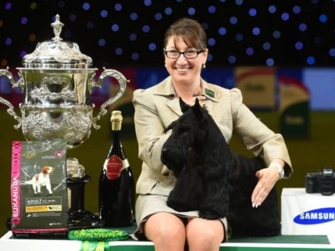 Crufts 2017: Where to watch it live, how to get tickets, TV listings and full schedule