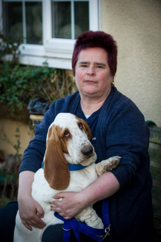 Jo Town with her Beagle Smartie Pants.  A dog lover is selling the contents of her home on eBay to pay the £1,300 vet's bills for her beloved pooch's EYE LIFT.  See MASONS story MNEBAY.  Jo Town, 51, has listed nearly everything she owns on the buy and sell website so she can pay the bills for two operations for her nine-month-old Basset Hound Smartie Pants.  She first noticed a problem in the puppy's eye when she was three months old and her eyelid had rolled over.  She had an operation to straighten it out but then an ulcer appeared in the other eye and she contracted cherry eye - a condition that causes the gland underneath the eyelid to pop out.   Vets then told Jo that Smartie's eyes were too small for her sockets and she needed two operations to rectify the problem, which she has now had.   She had double eye lifts on both eyelids and surgery to push the gland back into the eyelid.   If the eyes had been left it would have resulted in Smartie going blind and further infections.  Jo is now paying the surgery Animal Health Trust in Newmarket, Suffolk, in installments.
