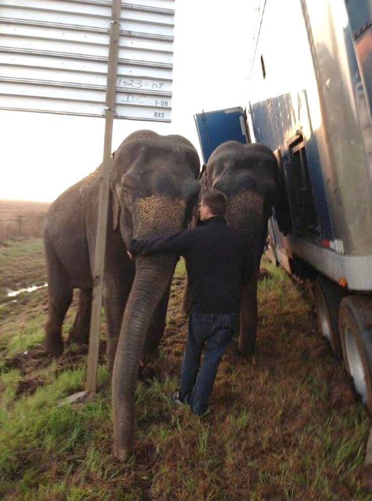 MANDATORY CREDIT: Natchitoches Parish Sheriff's/Rex  Mandatory Credit: Photo by Natchitoches Parish Sheriff's/REX (4588009b)  Two elephants keeping the eighteen wheeler truck from overturning  Two elephants keep eighteen wheeler truck from overturning, Natchitoches Parish, Louisiana, America - 24 Mar 2015  Police deputies were left DUMBO-founded when they found two elephants keeping an eighteen wheeler truck from overturning.  Natchitoches Parish Sheriff's Deputies received a call at 7:03am on Tuesday (24 Mar) requesting assistance with a stranded eighteen wheeler truck on Interstate 49 near the Powhatan exit in Natchitoches Parish, Louisiana.  Deputies were dispatched to assist with traffic, but when they arrived on scene they were astounded to see two elephants seemingly bearing the weight of the 2000 Kenworth eighteen wheeler.  A total of three elephants were being transported from New Orleans to a circus in Dallas, Texas area when the truck became stuck after the driver pulled off the edge of the soft shoulder. Recent rains caused the ground off of the shoulder to be soft.  A local wrecker service was contacted to assist in the removal of the vehicle. No citations were issued.