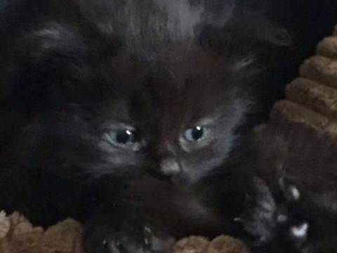 Zero to hero: Kitten starts house fire then alerts owners
