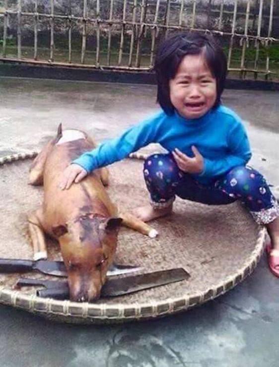 Dog, Vietnam