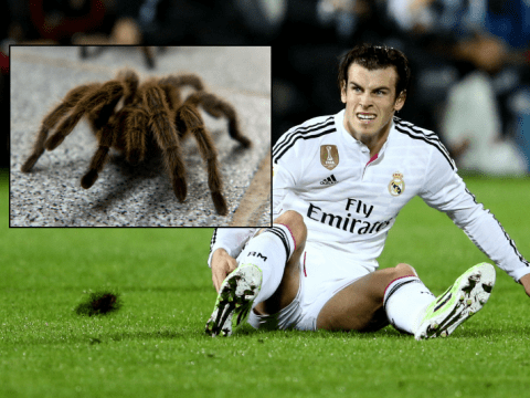 'I call out for somebody to help me': Real Madrid's Gareth Bale reveals he's terrified of spiders