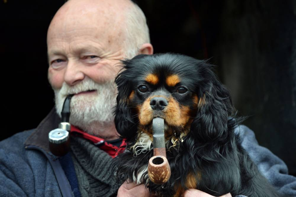 Pipe-puffing dog is giving up smoking with his owner