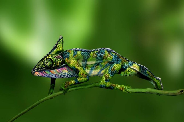 Chameleon made from two women covered in body art