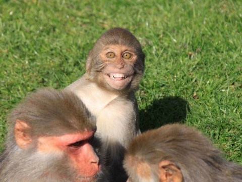 This monkey is very happy to see you