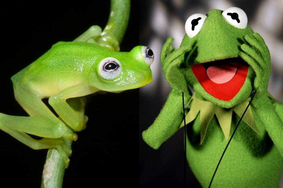 Don't we know you from somewhere? Kermit the Frog has a real-life doppelgänger, and he's just the cutest