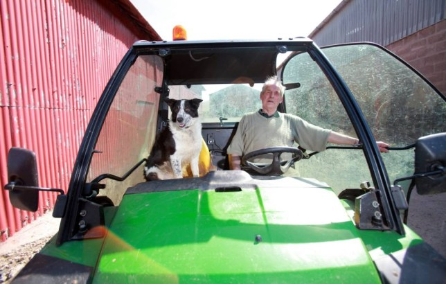 Don the dog who belongs to farmer Tom Hamilton of Kirkton Farm near Abington after he crash the farm vehicle onto the M74 near J13. April 22 2015.  See SWNS story SWDOG; Rush-hour traffic was disrupted yesterday (weds) when a runaway tractor crashed onto a motorway - driven by a SHEEPDOG.  Don the collie leapt on the mini tractor as farmer Tom Hamilton, 77, tended to a lamb in  a field alongside the M74. The dog leaned on the controls of the vehicle, which had been left standing without the brake on, and it shot out of the field. It crashed through a fence and ploughed across one carriageway of the motorway before hitting the central reservation and coming to a halt.
