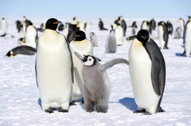 Headline: penguin 10 Christopher Michel.jpg Caption: penguin Christopher Michel/ flickr Photographer: Loaded on 24/04/2015 at 12:16 Copyright: Provider: Christopher Michel/ flickr