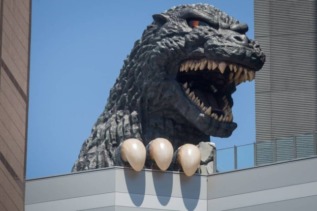 TOKYO, JAPAN - APRIL 15:  A 12 meter tall Godzilla replica head is seen on the 8th floor terrace of the Hotel Gracery Shinjuku on April 15, 2015 in Tokyo, Japan. The Godzilla replica, based on the original 1954 film is the main attraction of a new commercial complex containing a movie theatre, hotel and restaurants situated in the Kabukicho, red light district of Shinjuku and will be opened on April 17th. Along with the replica head the hotel also has six Godzilla view rooms with windows looking directly onto Godzilla, and one Godzilla themed room containing a man-sized Godzilla statue as well as a large Godzilla claw over the beds.  (Photo by Chris McGrath/Getty Images)