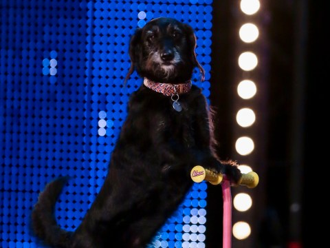 Britain's Got Talent 2015: Meet Millie, the dog who can ride a scooter