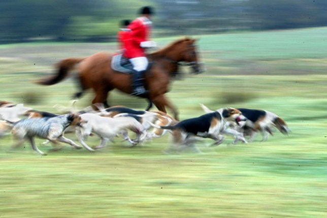 Hunting with dogs is wrong (Picture: Getty)