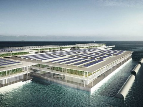 Could floating farms be the solution to food scarcity?