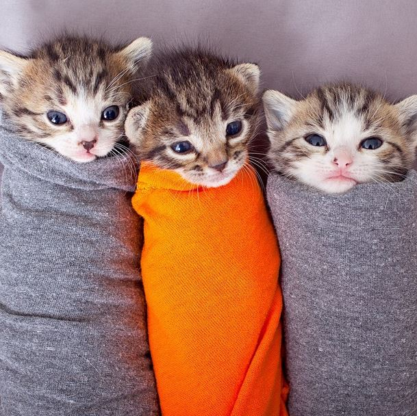 Purritos are a thing, and they're the cutest things you've ever seen