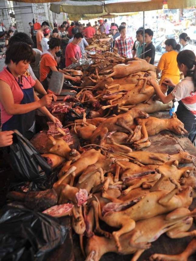 Campaigners want Chinese Yulin dog meat festival to be stopped ...