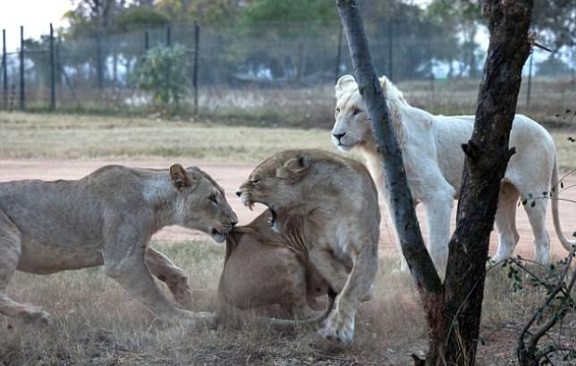 (Picture: Gauteng)