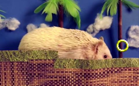 This real-life Sonic The Hedgehog might be slower but he's definitely cuter