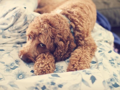 15 things you'll only know if you share your home with a dog