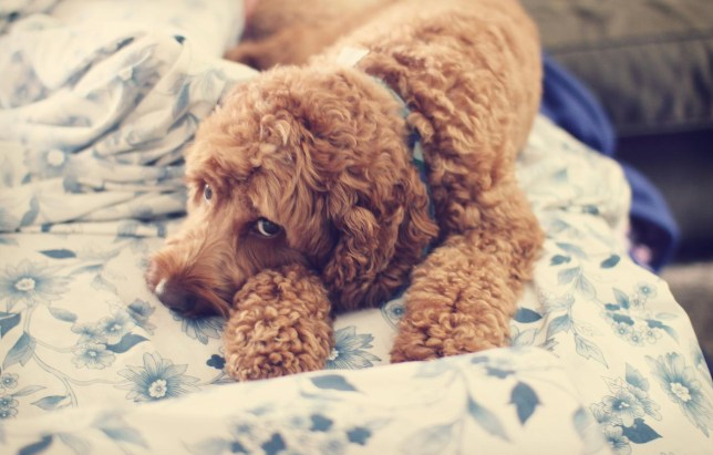 16 things you'll only know if you share your home with a dog