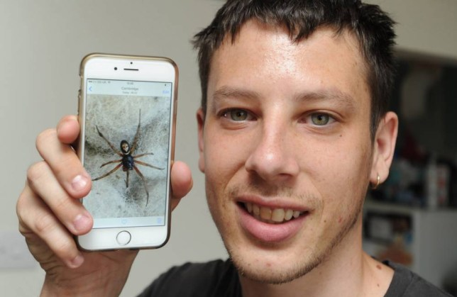 """Nickie King from Cambridge, who had the fright of his life when he picked up a false widow spider with the markings of a perfectly formed skull on its back.  See MASONS story MNFALSE.  A dad-of-three had a near miss when he picked up Britain's most venomous spider with his bare hands without realising what it was.  Nickie King, 25, saw the feared eight-legged creature land on his duster while he was at work cleaning an office.  He took a picture of the false widow spider and without realising the danger it posed he picked it up and placed it outside on Thursday morning (17/7).  But Nickie, from Cambridge, says he """"freaked out"""" when he realised the injuries the false widow can cause to people."""