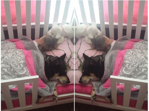 Mum finds daughter and dog having the cosiest nap time