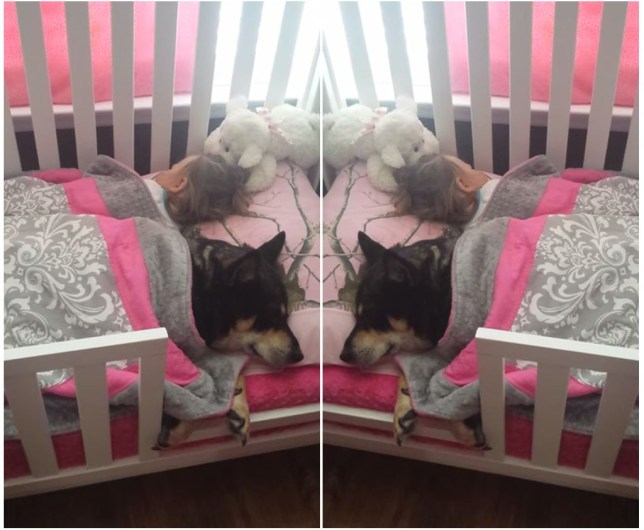 Dog and toddler napping in a bed