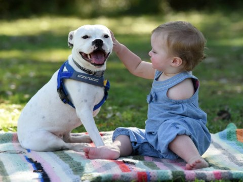 Toddler who was born with just one arm finds her soulmate in a three-legged dog