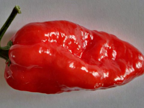 The hottest chilli pepper money can buy has just gone on sale at Tesco