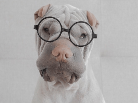 Try not to fall in love with Paddington the ever so cuddly and wrinkly dog