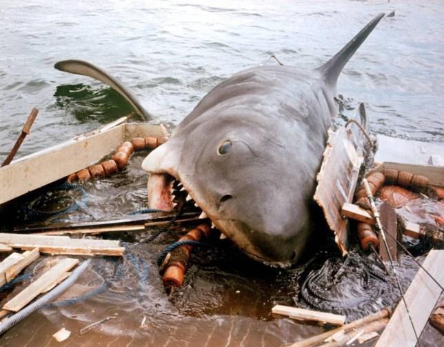Jaws movie still - Photo by Everett/REX Shutterstock