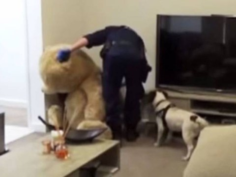 Guns and ammunition found inside stuffed teddy bear