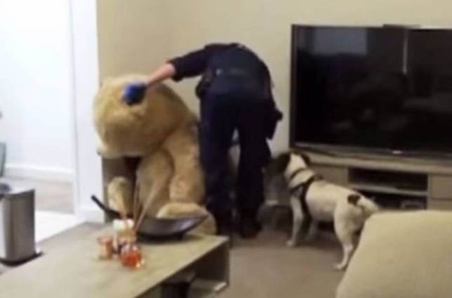 drug-teddy.jpg A teddy bear is not the most obvious hiding place for two illegal weapons but police weren't fooled when they raided a man's apartment yesterday.