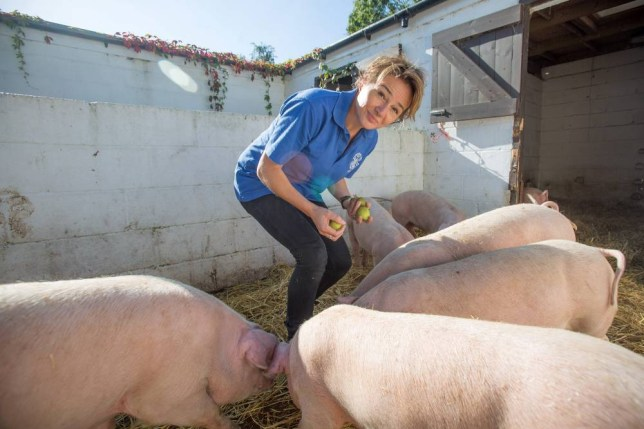 Nicky Bacon with her pigs after one was stolen. See SWNS story SWPIG: A farm worker was visited by police officers who thought she was trying to prank them when she reported a stolen pig - because her name is NICKY BACON. Nicky called officers to report the theft of a piglet from her place of work, as the CEO of the farm was on holiday at the time. But shortly after, the 50-year-old got a phone call questioning the details of the log - in particular her name. Despite reassuring them the report was genuine, two officers from Avon and Somerset Constabulary turned up at her home.