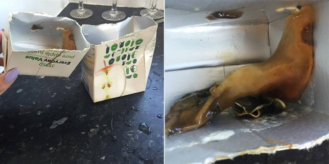 PIC FROM MERCURY PRESS (PICTURED: THE APPLE CARTON LORNA FISHER BOUGHT FROM TESCO CONTAINING THE UNIDENTIFIED CREATURE) A disgusted shopper claims she was left feeling sick after finding 'a slug-like alien' in a carton of apple juice - just moments after she and her partner drank it. Lorna Fisher was so shocked by the rank taste of the Tesco drink that she cut the product in half Ò and claims she found a huge slug-like Îforeign bodyÌ taking up half the carton. The 26-year-old was offered a 65p refund for the item, but said the episode had left her queasy and vowed never to drink the juice ever again. She bought the drink - which had a best before date of late 2016 - from Tesco's store in Chineham Shopping Centre, Basingstoke, last week. SEE MERCURY COPY