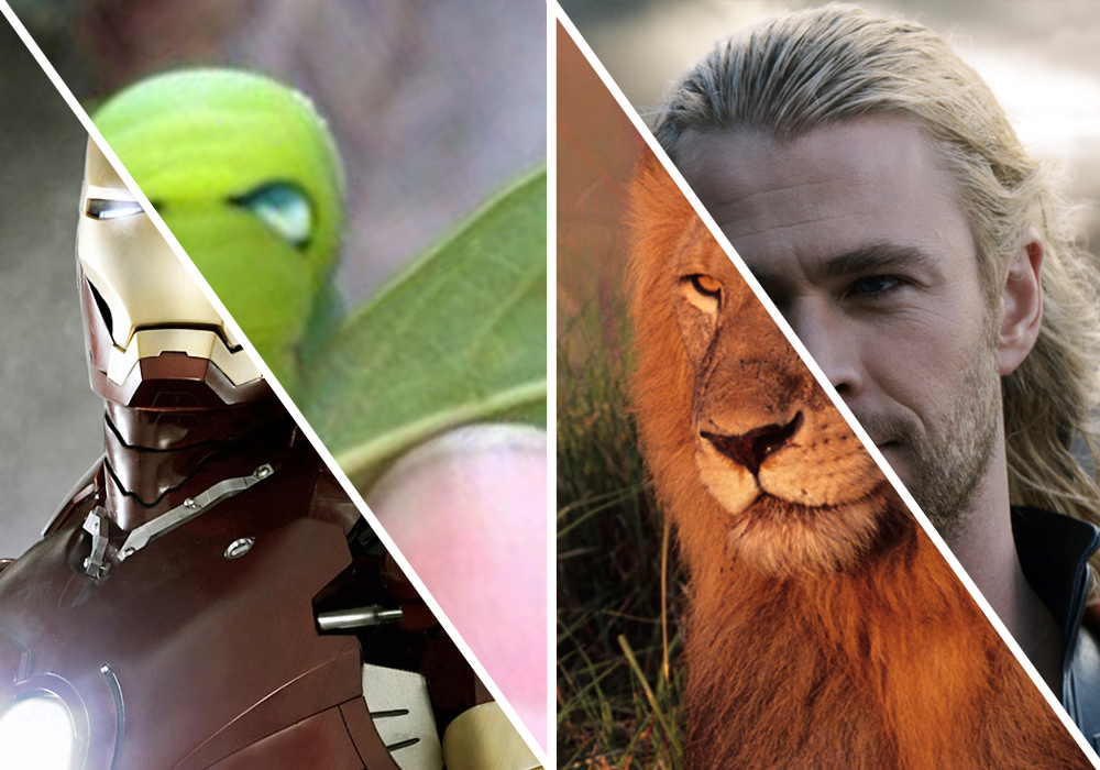 The Wolverine monkey and 7 other animals that look just like superheroes