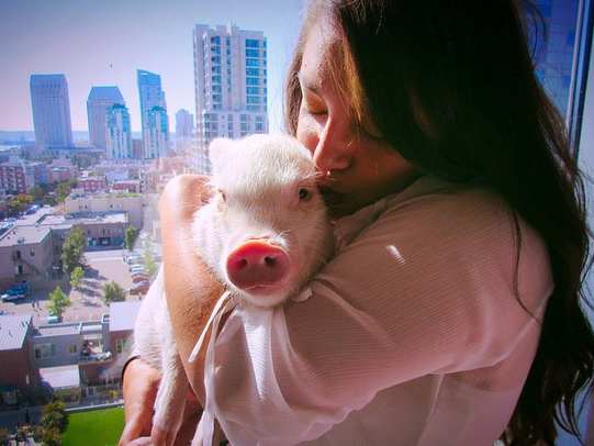 Hamlet the adorable pig helped her owner come to terms with epilepsy