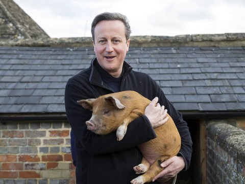 Dewsbury Conservatives have cancelled their pig racing event
