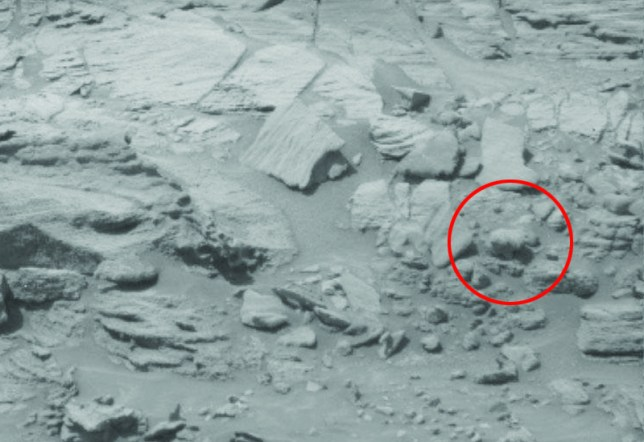 'Bear' seen on Mars