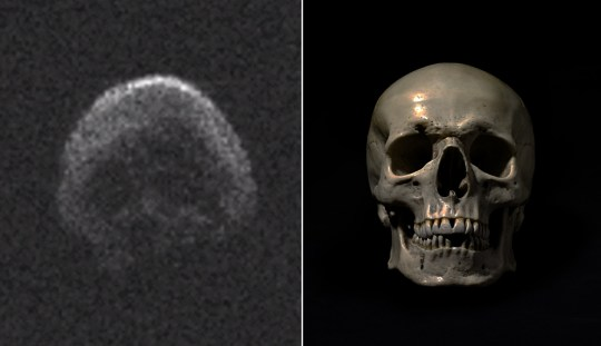 Dead comet that will safely fly past Earth today looks eerily like a skull Credit: Twitter/NASA / Getty Images