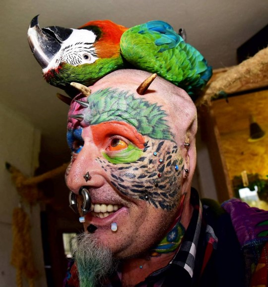 """Extreme body mod fan Ted Richards, AKA Parrot man - who has had his ears cut off to look like his parrot.Ted is pictured with his parrot Teaka. See SWNS story SWPARROT; A man who had his face and eyeballs tattooed to look like his pet parrots has gone a step further - by cutting off his EARS. Bonkers Ted Richards, 56, is obsessed by pets Ellie, Teaka, Timneh, Jake and Bubi and has his face tattooed with colourful feathers. But the animal nut - who has 110 tattoos, 50 piercings and a split tongue - has now had both his ears removed by a surgeon in a six hour operation. Eccentric Ted has given his severed ears to a friend who """"will appreciate them"""" and is now planning to find a surgeon prepared to turn his nose into a BEAK."""
