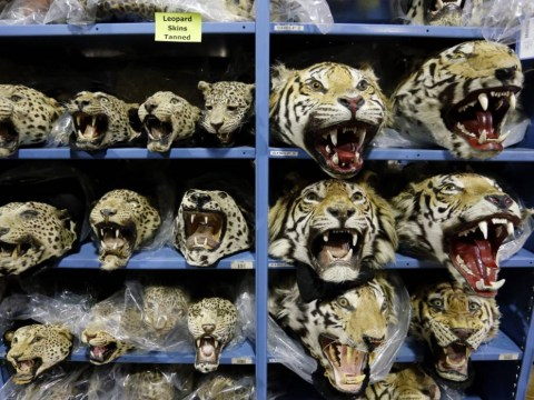 These upsetting photos show the full extent of illegal wildlife trafficking